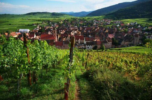 elzas-wijnroute