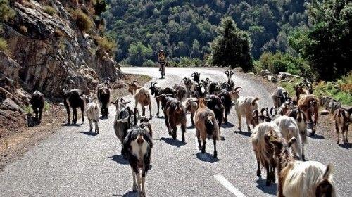 Fietsvakantie Corsica