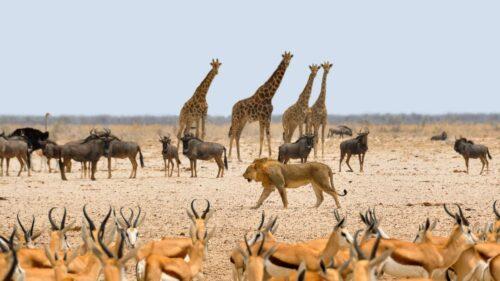 Fietsvakantie Namibië